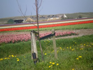 Flower Fields at Falga