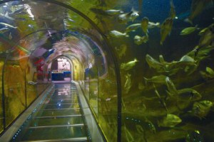 See aquarium Fort Kijkduin